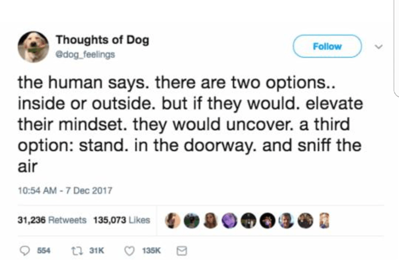 Text - Thoughts of Dog Follow @dog_feelings the human says. there are two options... inside or outside. but if they would. elevate their mindset. they would uncover. a third option: stand. in the doorway. and sniff the air 10:54 AM - 7 Dec 2017 31,236 Retweets 135,073 Likes t3 31K 135K 554