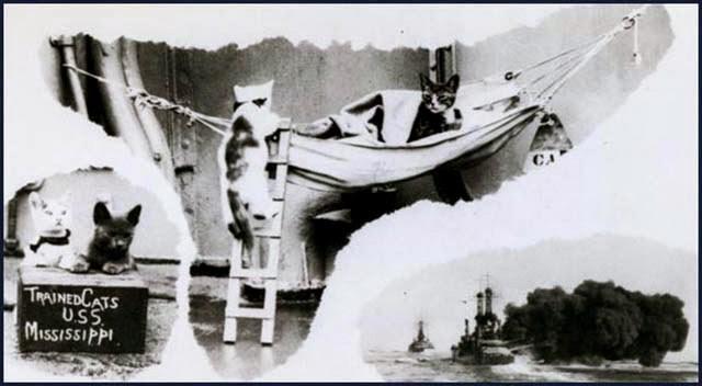 Vehicle - TRAINEDCATS U.SS MISSISSIPPI