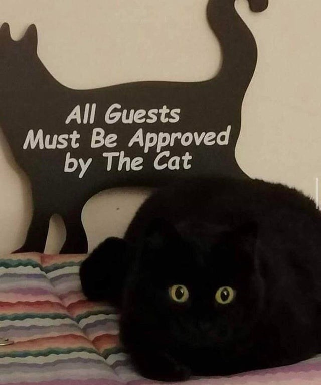 Cat - All Guests Must Be Approved by The Cat