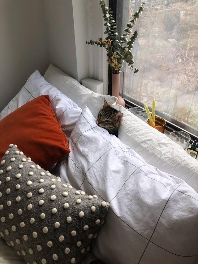 Bed sheet - 100