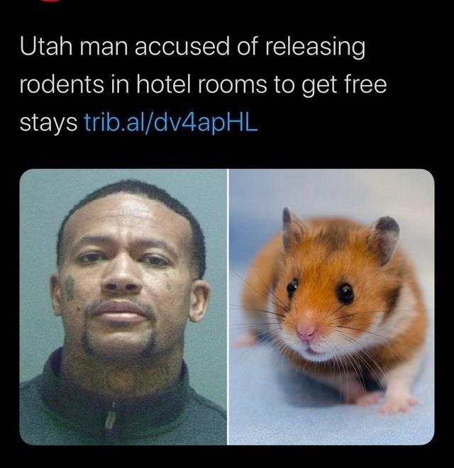 Hamster - Utah man accused of releasing rodents in hotel rooms to get free stays trib.al/dv4apHL
