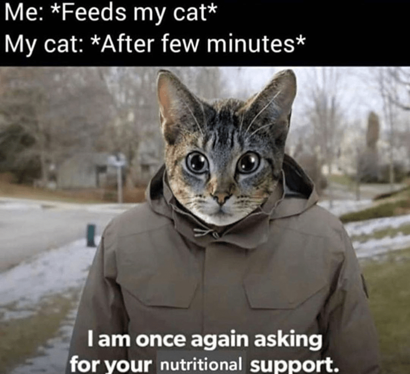 Funny meme about cats, bernie sanders asking for financial support, cat asking for nutritional support | me: feeds my cat my cat after a few minutes