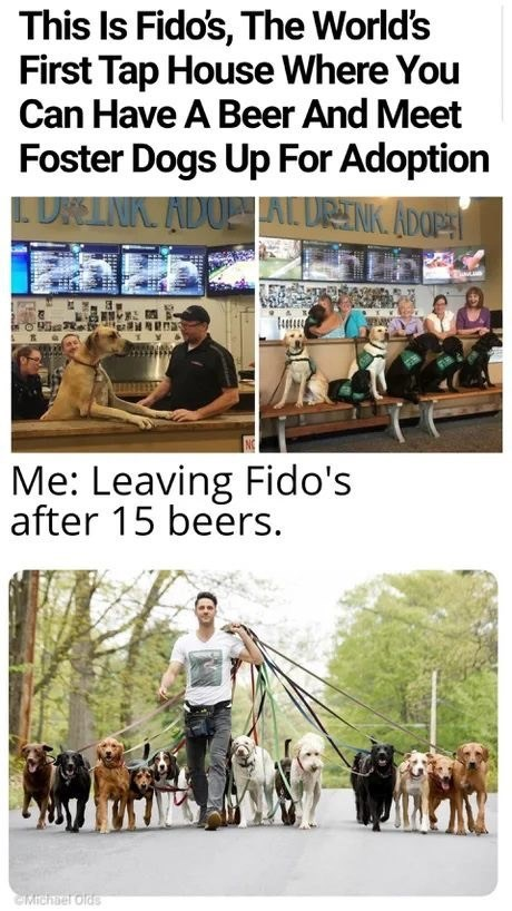 Working animal - This Is Fido's, The World's First Tap House Where You Can Have A Beer And Meet Foster Dogs Up For Adoption LURELNK. ADOE AL URENK. ADOP Me: Leaving Fido's after 15 beers. Michaer olds