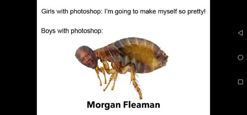 Insect - Girls with photoshop: I'm going to make myself pretty! Boys with photoshop: Morgan Fleaman