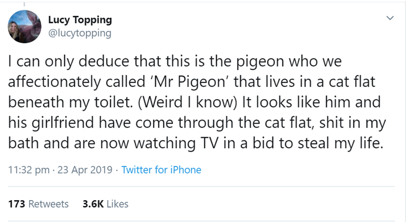 Text - Lucy Topping @lucytopping I can only deduce that this is the pigeon who we affectionately called 'Mr Pigeon' that lives in a cat flat beneath my toilet. (Weird I know) It looks like him and his girlfriend have come through the cat flat, shit in my bath and are now watching TV in a bid to steal my life. 11:32 pm · 23 Apr 2019 · Twitter for iPhone 3.6K Likes 173 Retweets