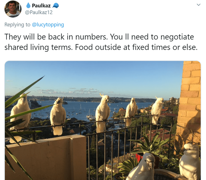 Adaptation - Paulkaz @Paulkaz12 Replying to @lucytopping They will be back in numbers. You Il need to negotiate shared living terms. Food outside at fixed times or else.