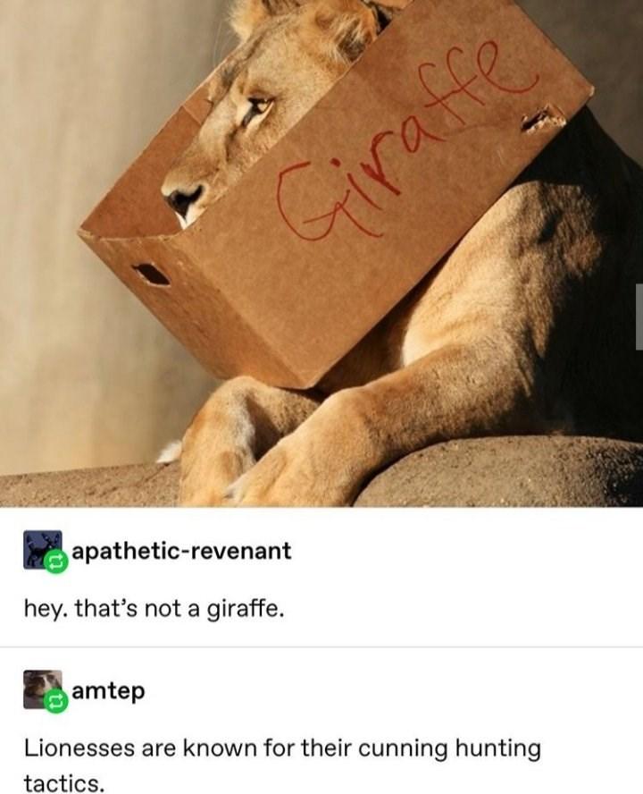 cat memes - 9443070464