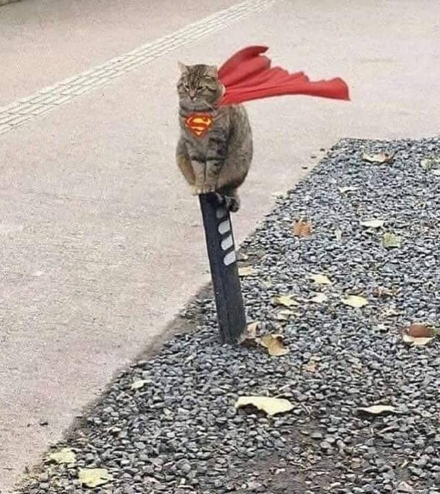 pic of a grey striped cat edited with a red cape flowing in the wind behind it and the superman s symbol on its chest sitting on a pole above gravel