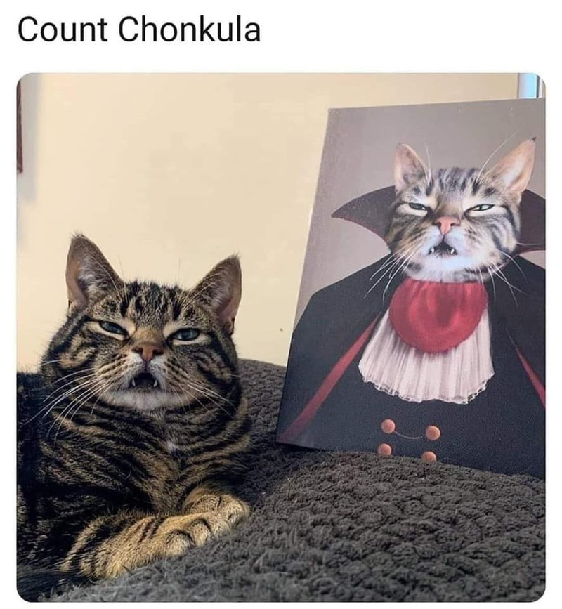 Cat - Count Chonkula