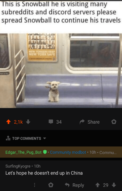 Font - This is Snowball he is visiting many subreddits and discord servers please spread Snowball to continue his travels HEW YORKERS KEEP NEW YORK SAFE 1 2,1k + 34 Share Î TOP COMMENTS Edgar_The_Pug_Bot • Community modbot • 10h • Commu. SurfingKyogre • 10h Let's hope he doesn't end up in China Reply 1 29 +