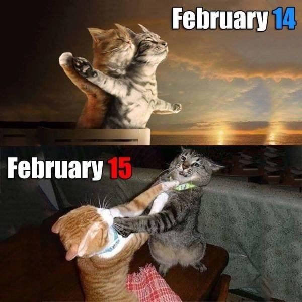 Felidae - February 14 February 15