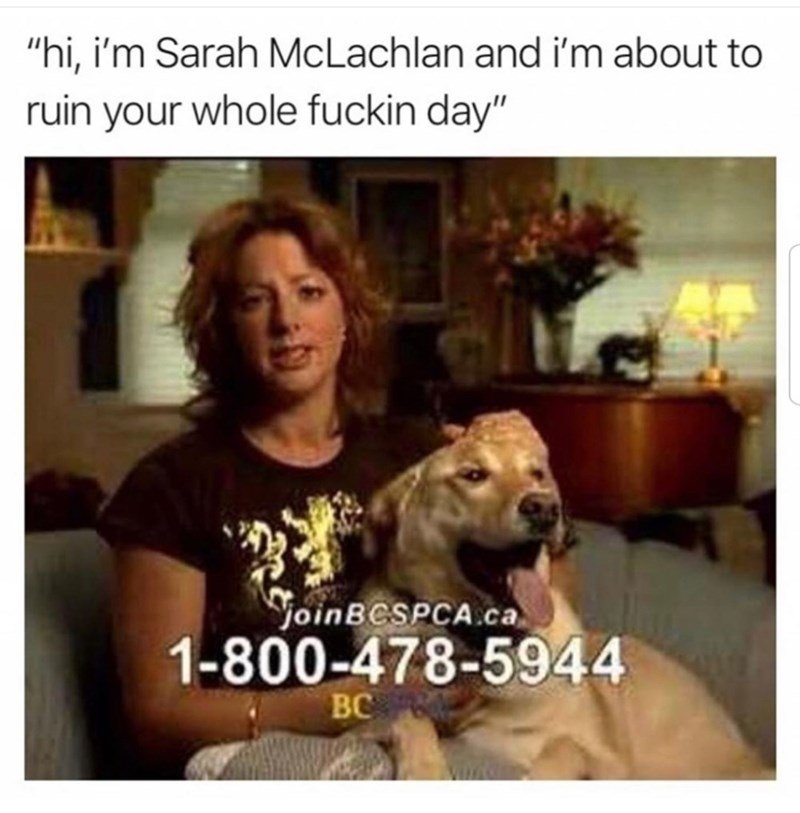 """Canidae - """"hi, i'm Sarah McLachlan and i'm about to ruin your whole fuckin day"""" YoinBCSPCA.ca 1-800-478-5944 BC VIIAO"""