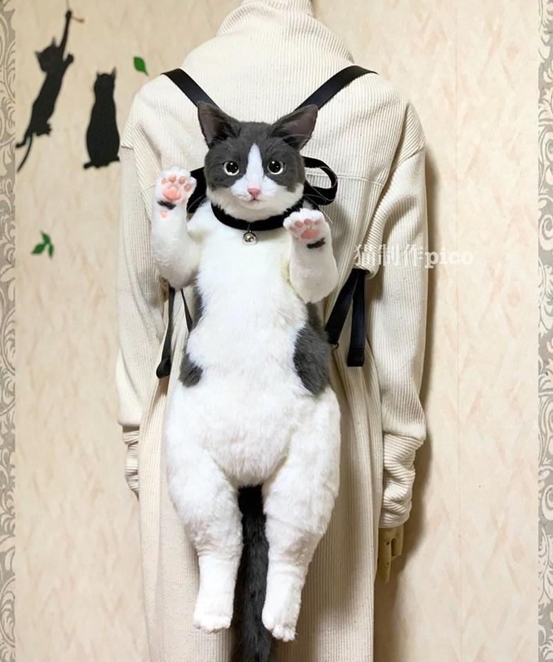 Cat - fpico