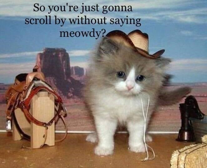 so you're just gonna scroll by without saying meowdy | pic of a grey and white fluffy kitten wearing a cowboy hat and standing next to miniature horse riding equipment in front of a western desert backdrop