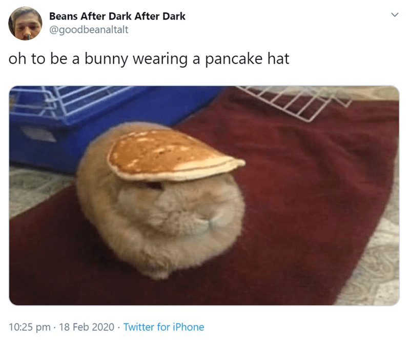 Fur - Beans After Dark After Dark @goodbeanaltalt oh to be a bunny wearing a pancake hat 10:25 pm · 18 Feb 2020 · Twitter for iPhone
