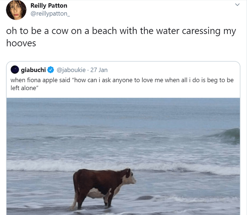 """Text - Reilly Patton @reillypatton_ oh to be a cow on a beach with the water caressing my hooves giabuchi @jaboukie · 27 Jan when fiona apple said """"how can i ask anyone to love me when all i do is beg to be left alone"""""""