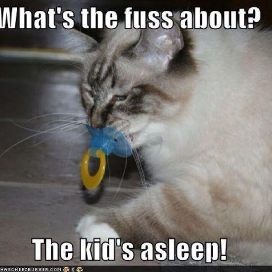 Cat - What's the fuss about? The kid's asleep! HASCHEEZBUORGER.COM
