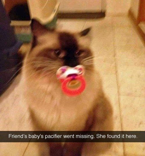 Cat - Friend's baby's pacifier went missing. She found it here.