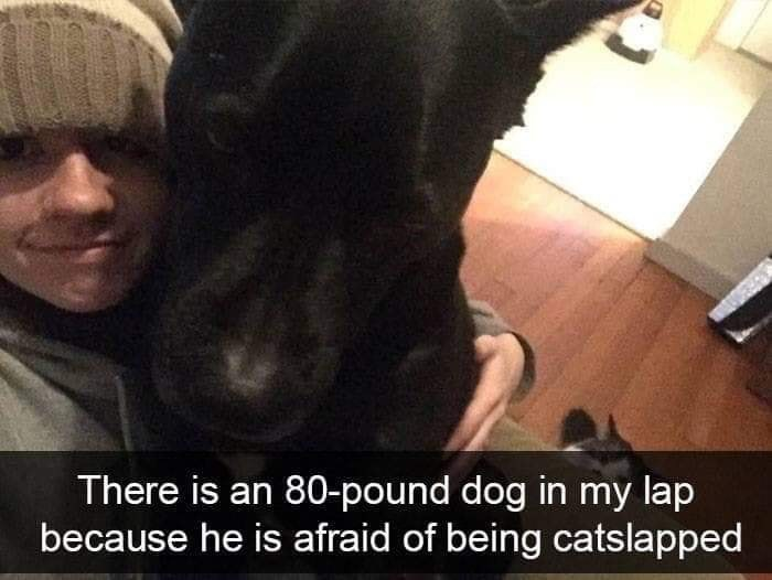 Selfie - There is an 80-pound dog in my lap because he is afraid of being catslapped