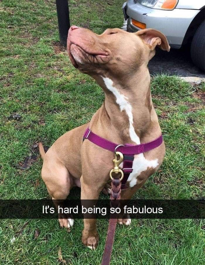 Dog - It's hard being so fabulous