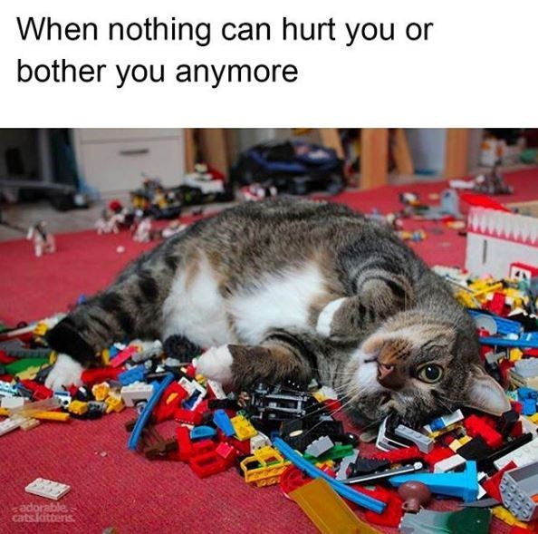 cat meme | when nothing can hurt you or bother you anymore | pic of a cute cat grey and white with black stripes lying down on top of a pile of lego parts looking comfy