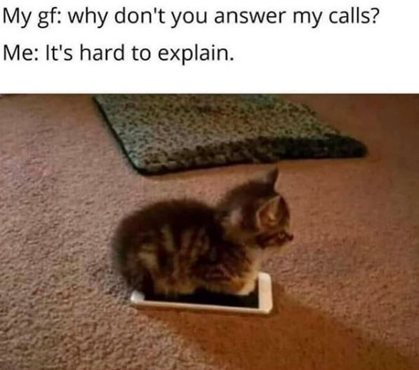 cat meme | my gf: why don't you answer my calls? me: it's hard to explain | tiny kitten sitting on top of a smartphone