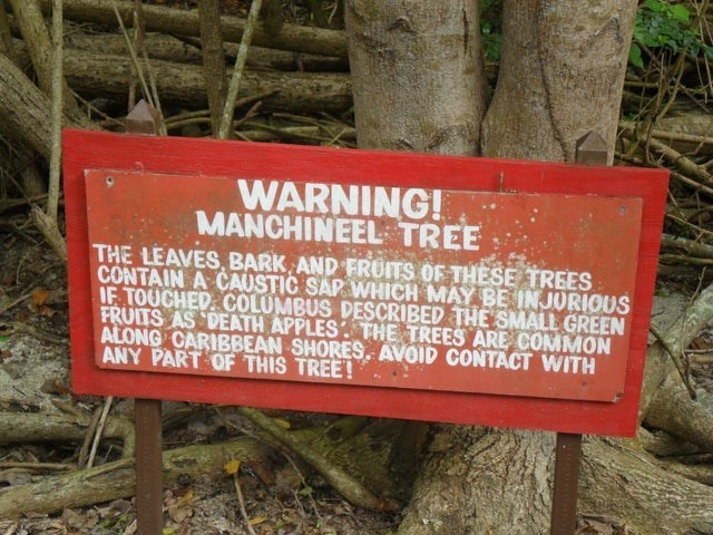Nature reserve - WARNING! MANCHINEEL TREE THE LEAVES, BARK AND FRUITS OF THESE TREES CONTAIN A CAUSTIC SAP WHICH MAY BE INJURIOUS IF TOUCHED COLUMBUS DESCRIBED THE SMALL GREEN FRUITS AS DEATH APPLES THE TREES ARE COMMON ALONG CARIBBEAN SHORES., AVOID CONTACT WITH ANY PART OF THIS TREE!