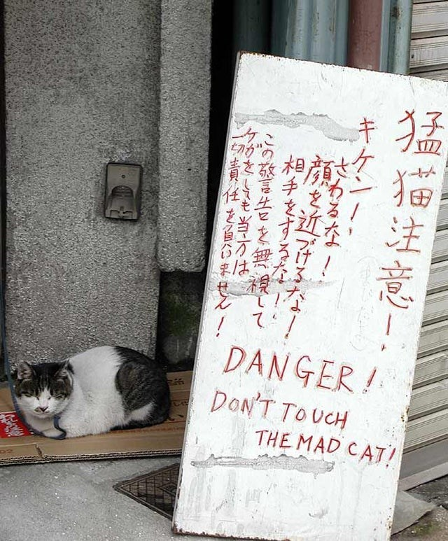 Cat - て DANGER! DON'T TOUCH THE MAD CAT! 總注意! 相手之す がきしてもm-は