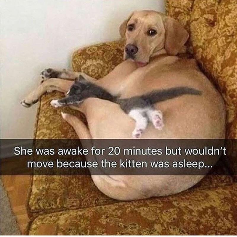cat memes - 9445644288