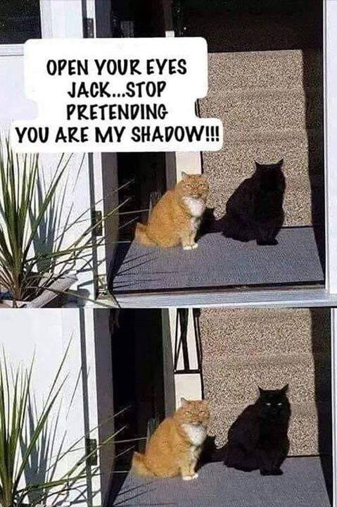 cat meme open your eyes jack stop pretending you are my shadow pic of an orange and a black cat standing side by side in a similar position so that it seems like the black cat is the orange one's shadow