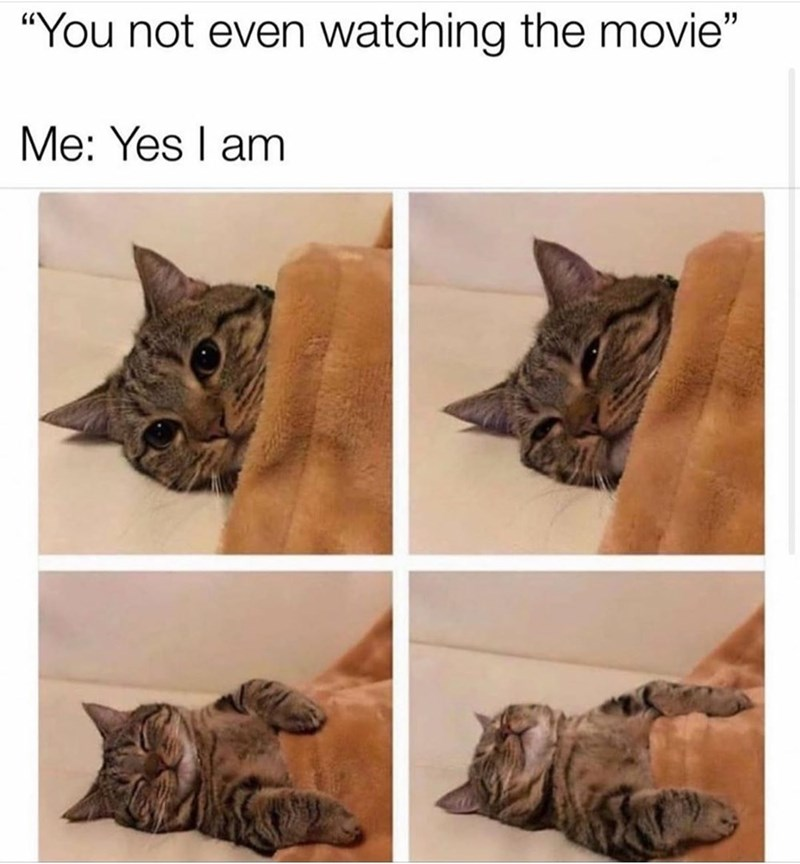 cat meme you not even watching the movie yes i am four pics of a cute grey cat lying down under a fuzzy blanket and falling asleep