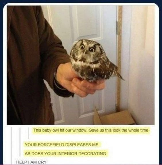 Owl - This baby owl hit our window. Gave us this look the whole time YOUR FORCEFIELD DISPLEASES ME AS DOES YOUR INTERIOR DECORATING HELP I AM CRY