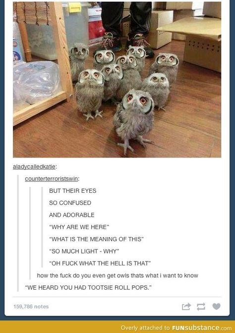 """Organism - aladycalledkatie: counterterroristswin: BUT THEIR EYES so CONFUSED AND ADORABLE """"WHY ARE WE HERE"""" """"WHAT IS THE MEANING OF THIS"""" """"SO MUCH LIGHT - WHY"""" """"OH FUCK WHAT THE HELL IS THAT"""" how the fuck do you even get owls thats what i want to know """"WE HEARD YOU HAD TOOTSIE ROLL POPS."""" 159,786 notes Overly attached to FUNSubstance.com"""