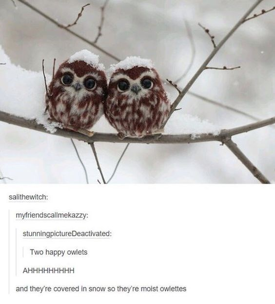 Owl - salithewitch: myfriendscallmekazzy: stunningpictureDeactivated: Two happy owlets АННННННННН and they're covered in snow so they're moist owlettes