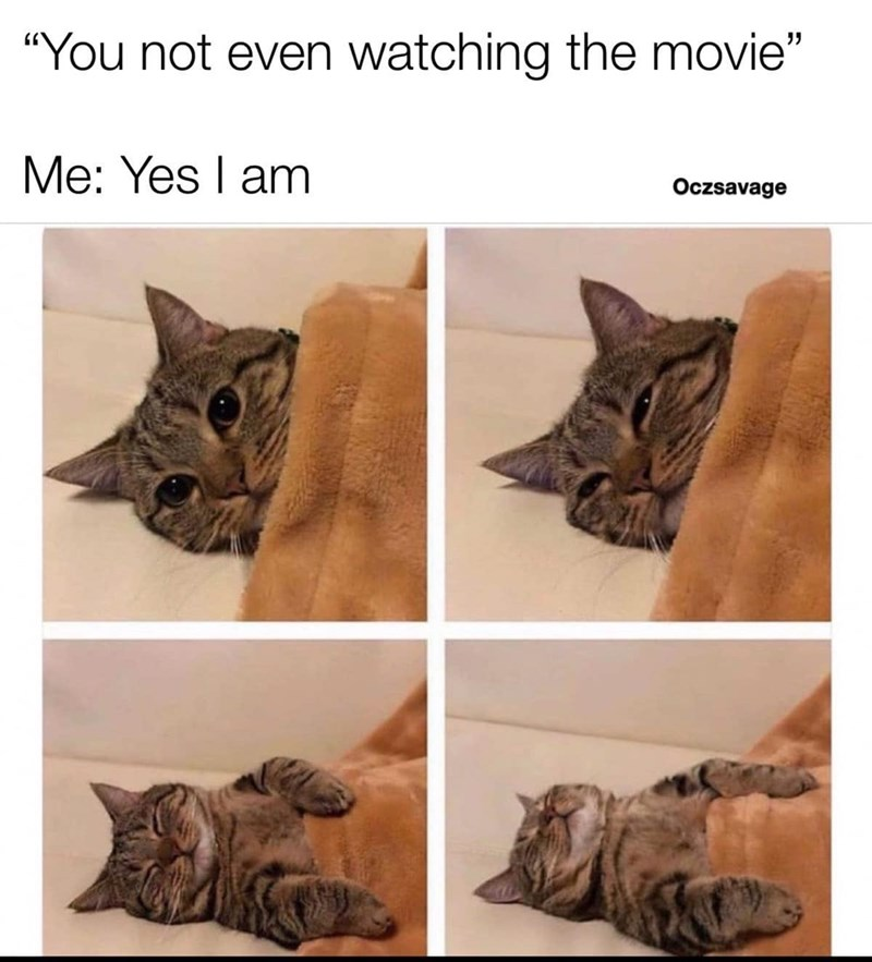 Funny meme featuring a cat lying down and falling asleep during a movie