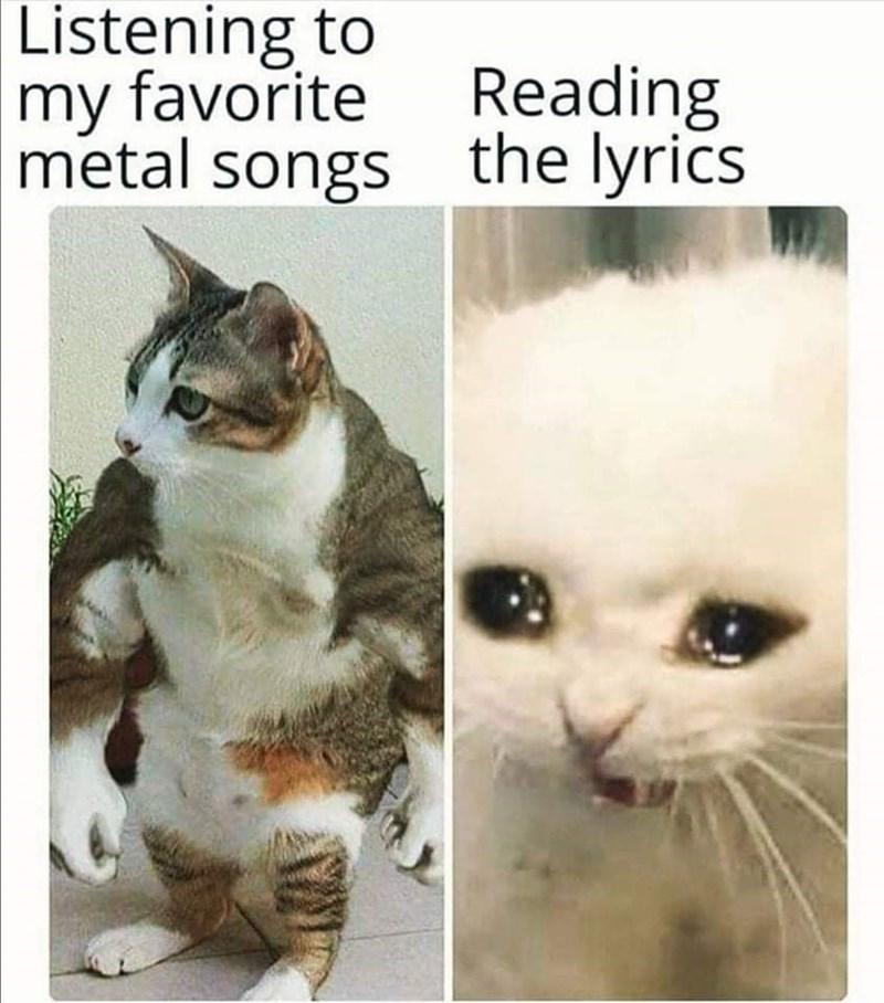 Cat - Listening to my favorite Reading metal songs the lyrics