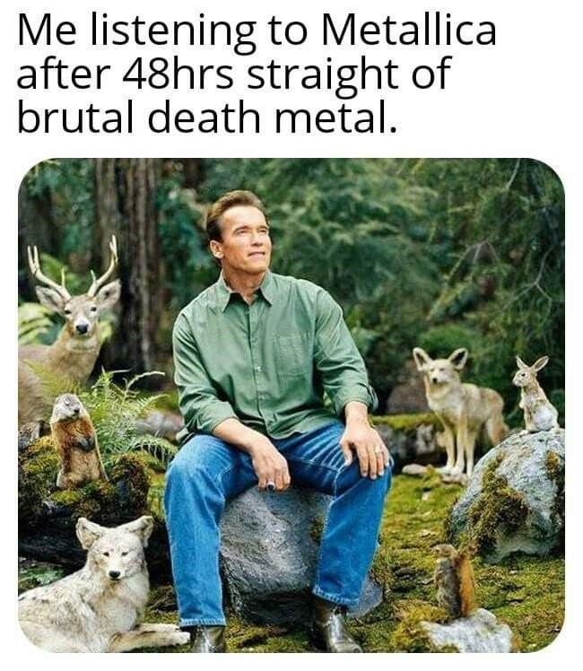 Wildlife - Me listening to Metallica after 48hrs straight of brutal death metal.
