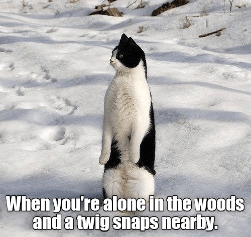 Photo caption - When you're alone in the woods and a twig snaps nearby.