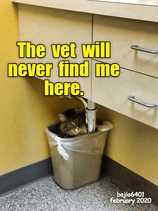 Wall - The vet will never find me here. bajio6401 february 2020