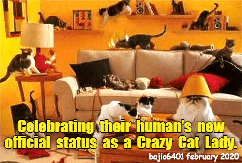 Room - Celebrating their human's new official status as a Crazy Cat Lady. bajio6401 february 2020