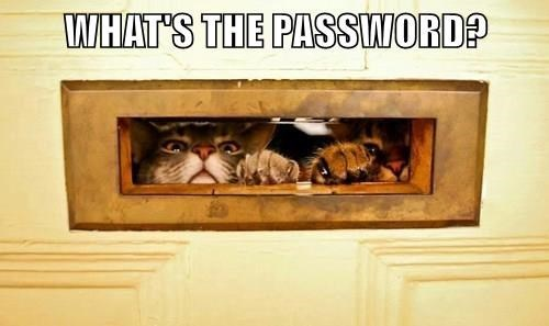 Cat - WHAT'S THE PASSWORD?