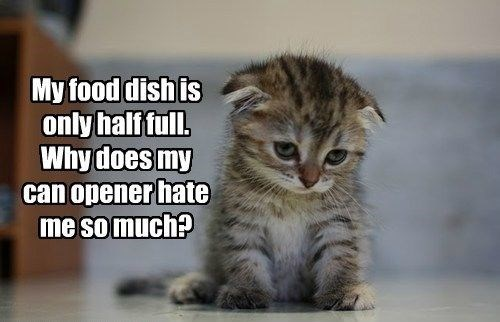 Cat - My food dish is only half full. Why does my can opener hate me so much?