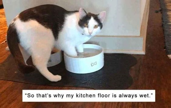 "Cat - ""So that's why my kitchen floor is always wet."""