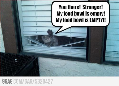 Photo caption - You there! Stranger! My food bowl is empty! My food bowl is EMPTY! 9GAG.COM/GAG/5320427