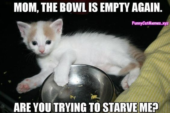 Cat - MOM, THE BOWL IS EMPTY AGAIN. FunnyCatMemes.xyz ARE YOU TRYING TÔ STARVE ME?