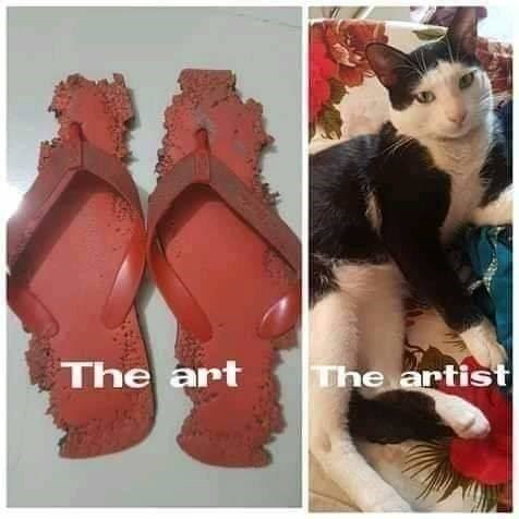 cat meme | the art: chewed up plastic red sandals flip flops the artist: black and white cat lounging on a colorful floral pattern blanket looking at the camera unashamed