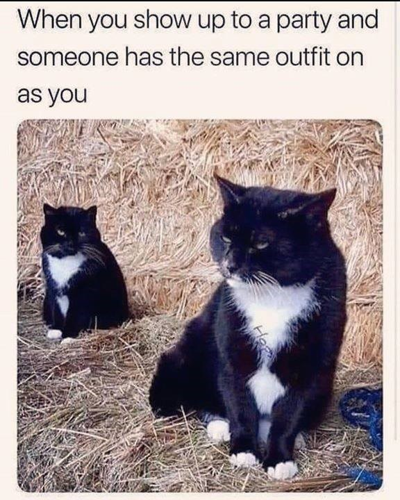 cat meme | when you show up to a party and someone has the same outfit as you | pic of two similar black and white cats sitting on straws looking mad angry grumpy
