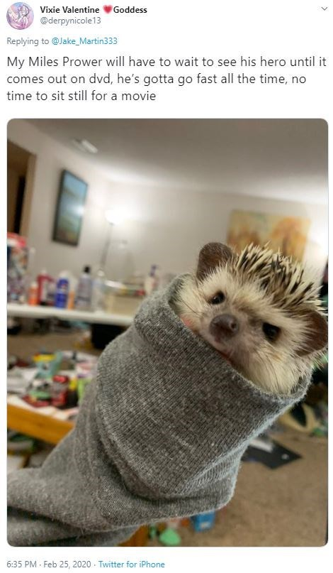Hedgehog - Vixie Valentine V Goddess @derpynicole13 Replying to @Jake_Martin333 My Miles Prower will have to wait to see his hero until it comes out on dvd, he's gotta go fast all the time, no time to sit still for a movie 6:35 PM - Feb 25, 2020 - Twitter for iPhone