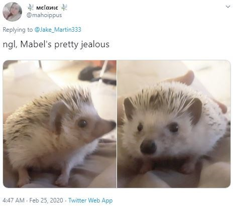 Hedgehog - Melanie @mahoippus Replying to @Jake_Martin333 ngl, Mabel's pretty jealous 4:47 AM - Feb 25, 2020 - Twitter Web App