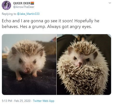 Hedgehog - QUEER DEERE @ArrowTheDeer Replying to @Jake_Martin333 Echo and I are gonna go see it soon! Hopefully he behaves. Hes a grump. Always got angry eyes. 5:13 PM - Feb 25, 2020 - Twitter Web App